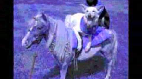 Shellac - dog and pony show