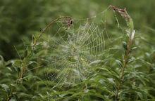 Hämähäkinseitti sk