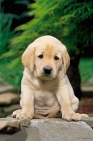 File:Pup.jpg