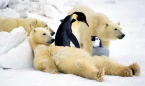 File:Polar bears and penguins!.jpg