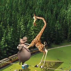 Gloria teaches Melman how to dance on a tightrope