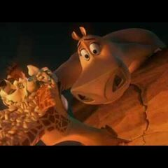 Gloria saves Melman from the volcano