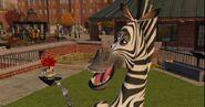 Zebra 8