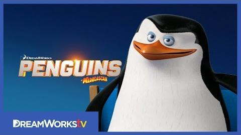 Meet Skipper PENGUINS OF MADAGASCAR