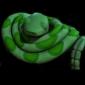 Green snake-char.jpg