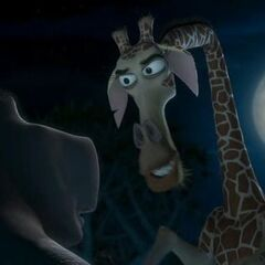 Melman gives Moto Moto instructions on how to treat Gloria