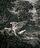 Leda and the Swan / Yeats