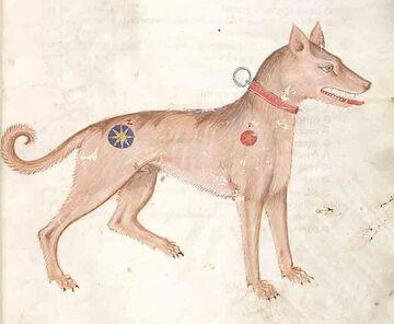 729px-Medieval dog