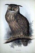 Eagleowl