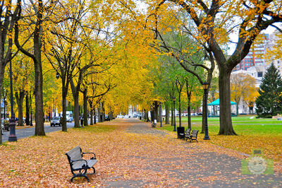 Autumn leaves in New Haven