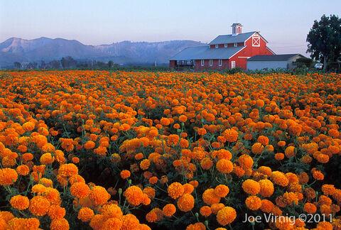 Santa-paula-california-barn
