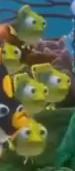 School of babyfish