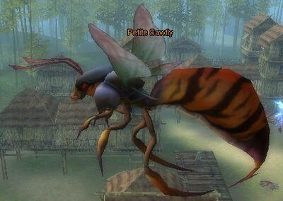 Petite Sawfly