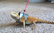 Duct-Tape-Dragon-Harness