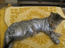 Duct-Taped-Cat