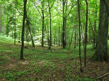 Forest full of ninjas