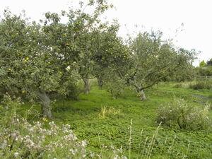 Orchard5