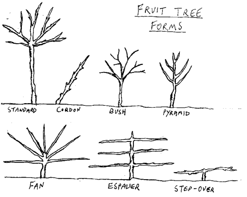 Fruittreeforms