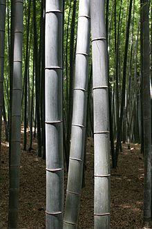File:Bambu.jpg