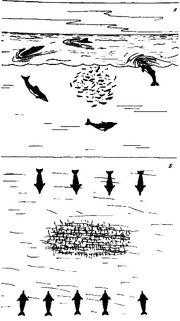 Загон дельфинами