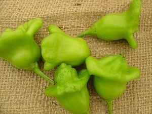 Aji-pepper