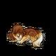Baby3Shetland Sheepdog