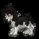 TeenShetland Sheepdog