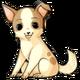 Chocochihuahuadog2