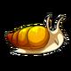 Teen3Common Apple Snail