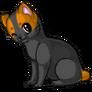 Bobtail adult orangeandblack