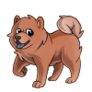 Child3Chow Chow