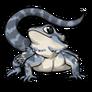Adult5Eastern Bearded Dragon