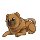 Baby5Chow Chow