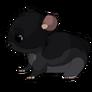 Blackchinchilla2