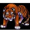 AdultBali Tiger