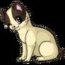 Bobtail adult
