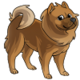 Adult5Chow Chow