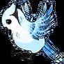 Adult(four)Blue Jay
