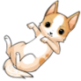 Caramelchihuahuadogstage3