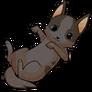 Chihuahuadog2 alt3