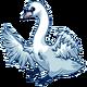 Adult(five)Mute Swan