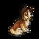 Child3Shetland Sheepdog