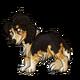 Teen2Shetland Sheepdog