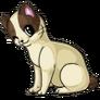 Bobtail adult lightbrown