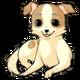 Chocochihuahuadog4