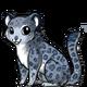 Snowleopard3 alt5
