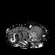Snowleopard1 alt2