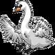 AdultMute Swan