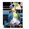 Macawbabyalt2