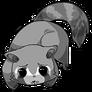 Raccoon12